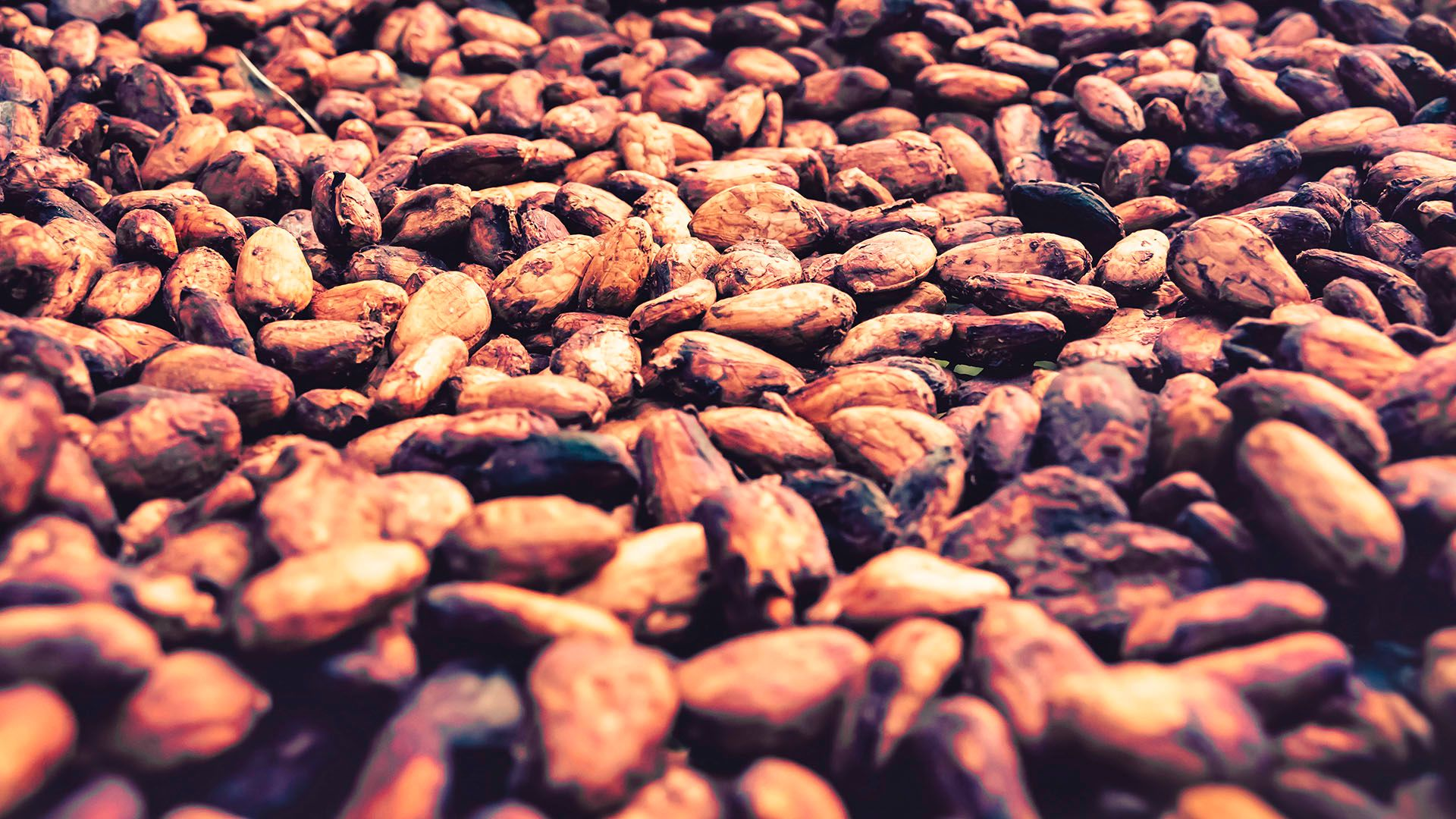 wanted:  Raw Cocoa Bean supplier