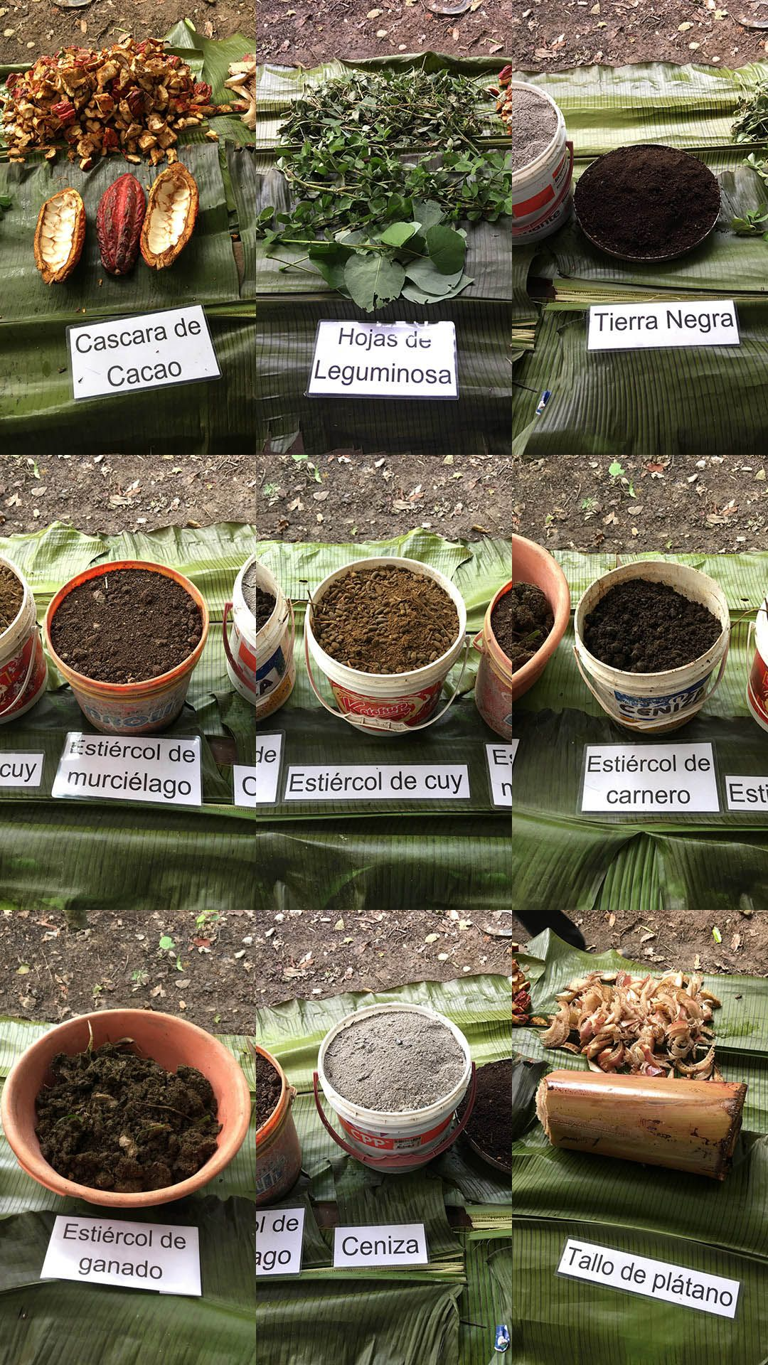 """9 of the 10 components of the organic composted fertilizer used in the high-density, high-intensity, """"lollipop"""" planting scheme at the Empresa Agroforestal y Ambiental Alborada in Tingo Maria, Peru. The 10th component is cacao juice."""