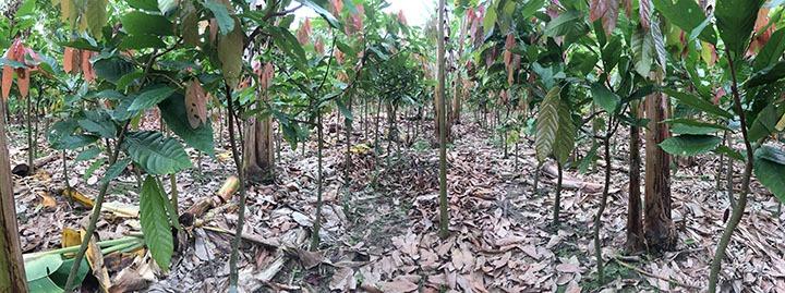 La Ruta del Cacao - Day 3