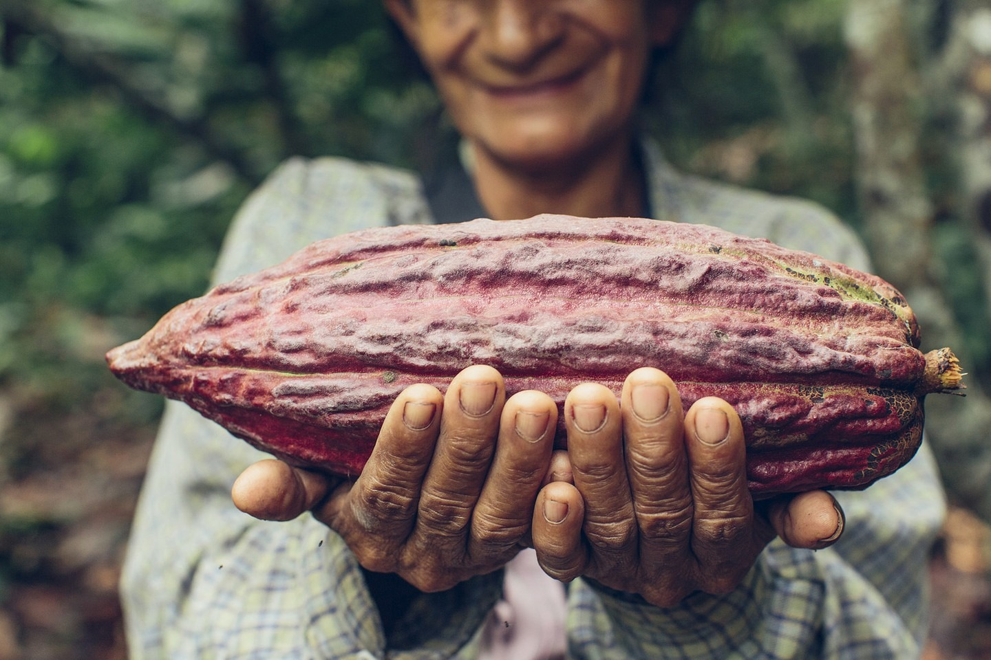 Can Cocoa Fuel Combat Climate Change?