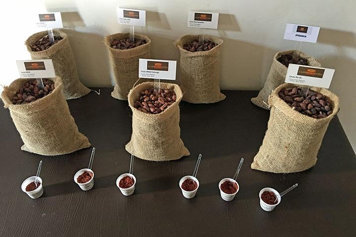 Tasting cacao on the farm