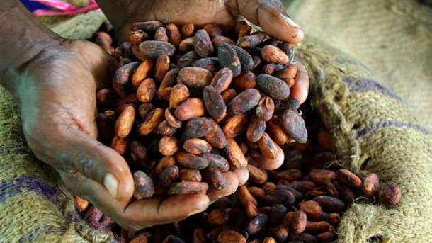 Paying the price of chocolate: Breaking cocoa farming's cycle of poverty