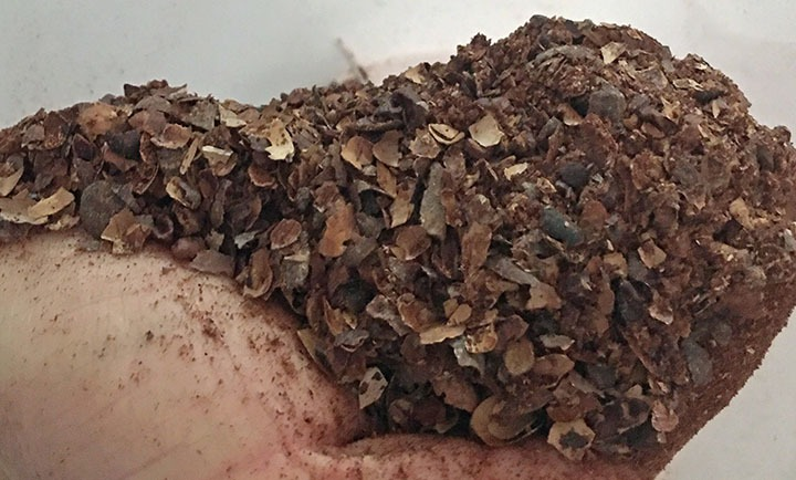 Cocoa Bean Shells: What can you do with them?