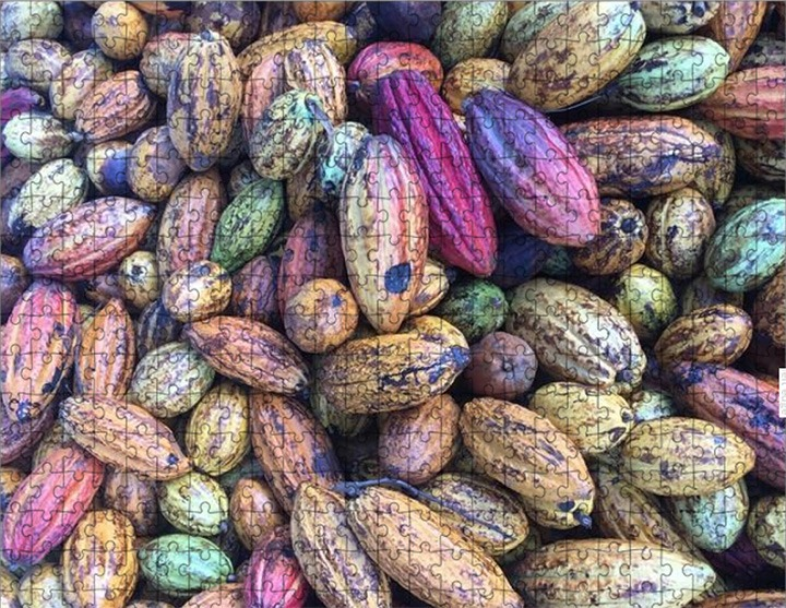 World's Hardest Cocoa Pod Jigsaw Puzzle? On Sale Now!