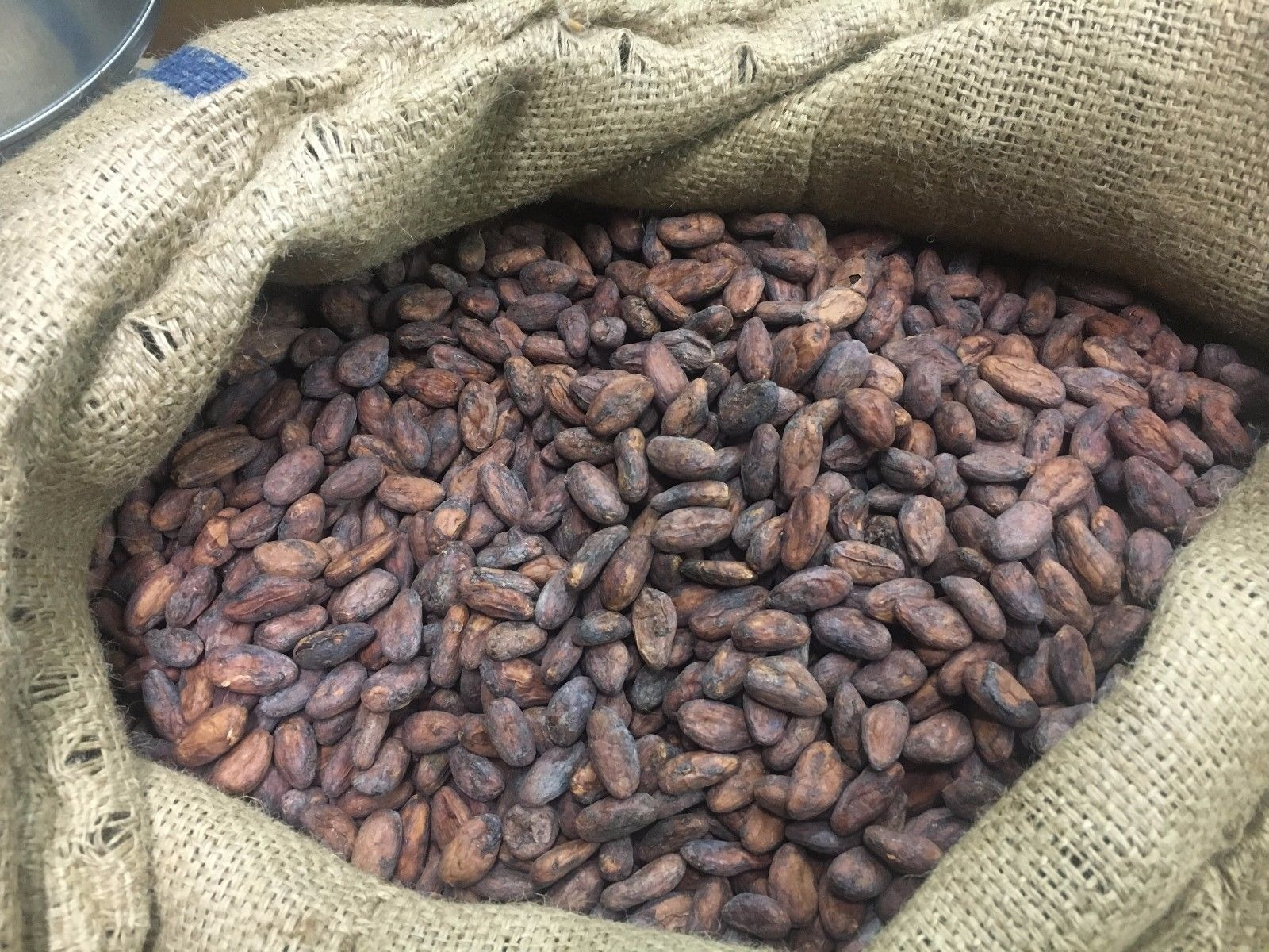 For sale : Peruvian Criollo (2017)