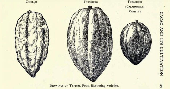 Reading List: Cocoa and Chocolate, Their History From Plantation to Consumer