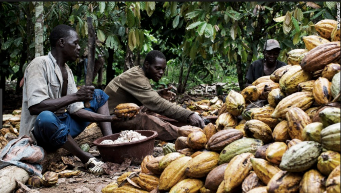 Producing Chocolate in Ivory Coast