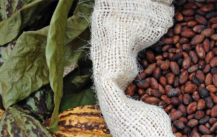 UPDATED - Demystifying the cocoa sector in Ghana and Côte d'Ivoire