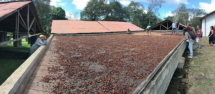 Cargill sets clear course for cocoa sustainability