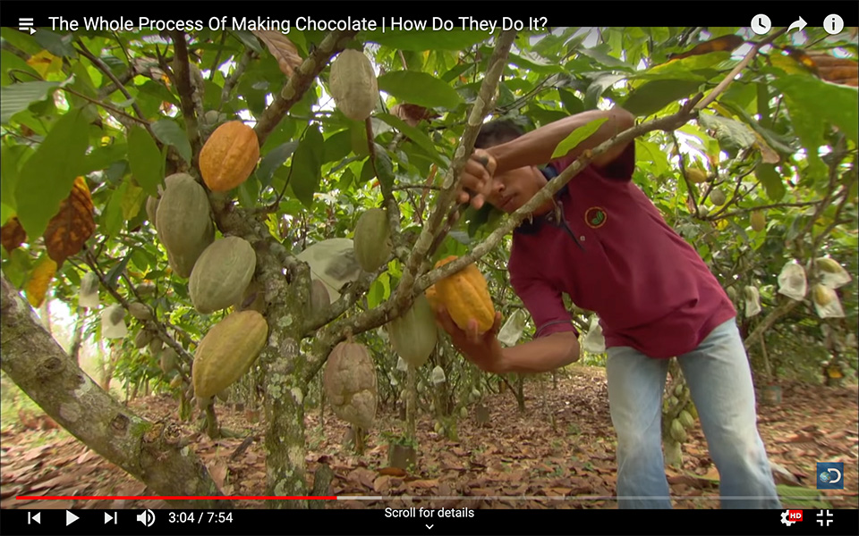 The Whole Process Of Making Chocolate | How Do They Do It?